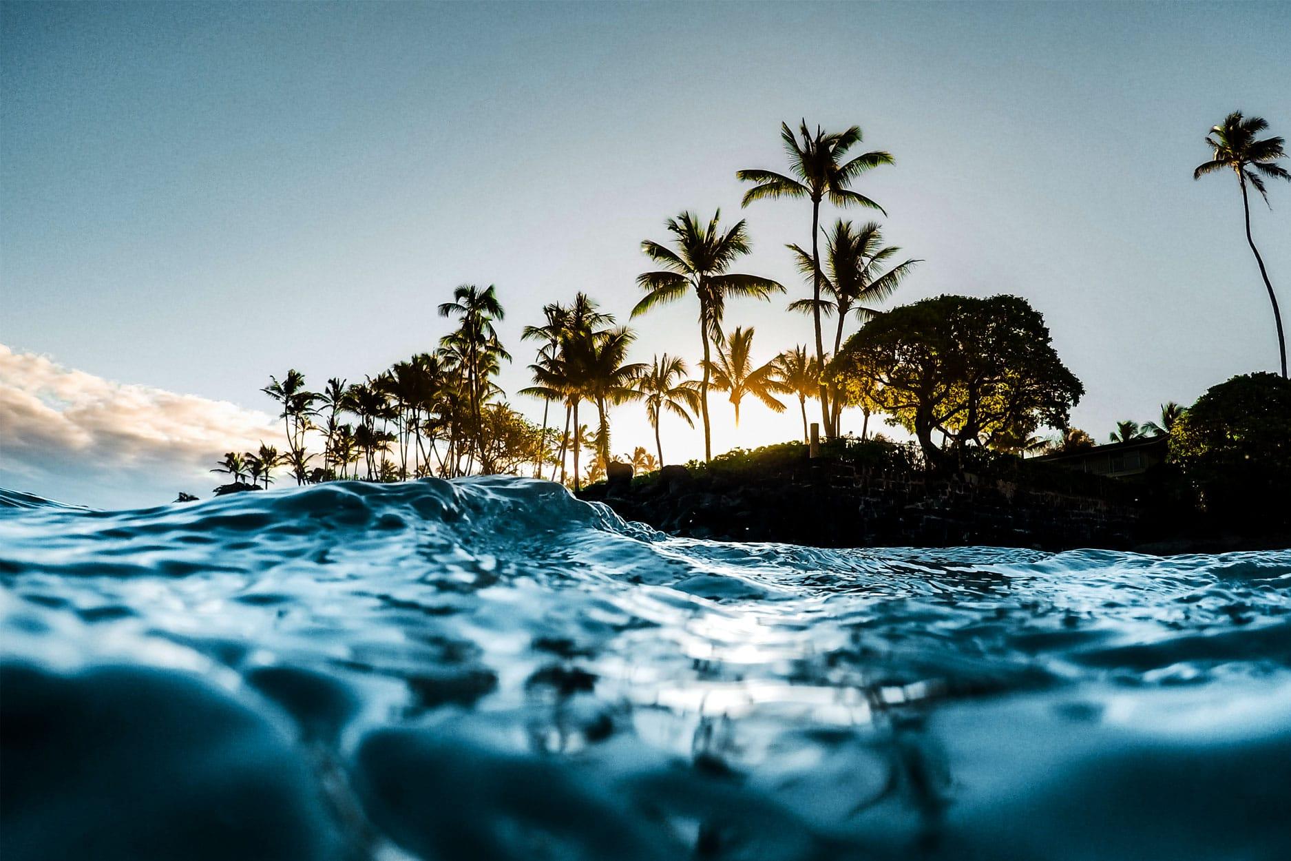 MauiD